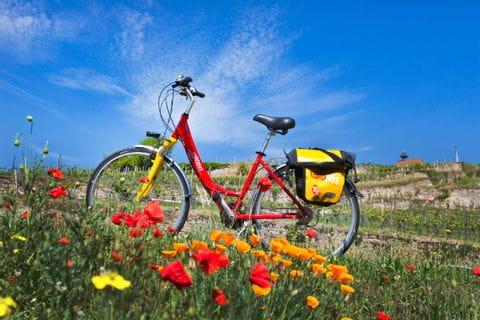 Wheel in the poppy field