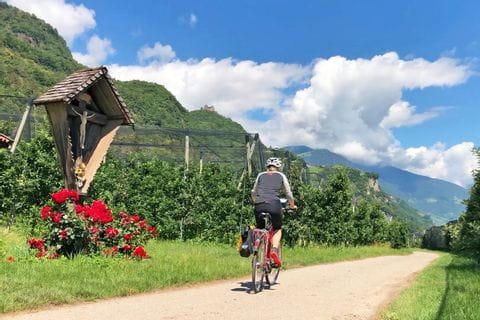 Radfahrer zwischen Apfelhainen in Südtirol