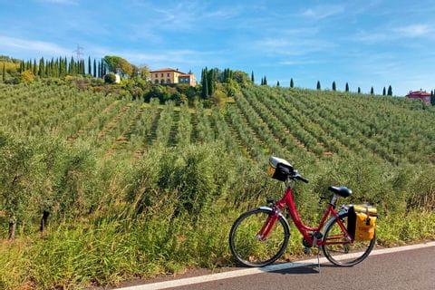 Vinci Weinberge Fahrrad