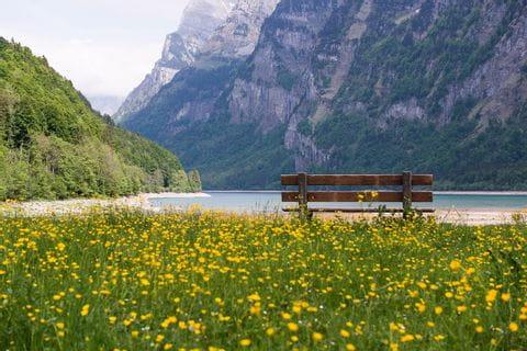 Bank auf Blumenwiese am Genfer See