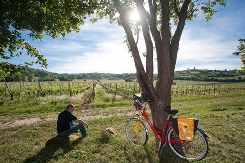 Pause bei den Weinreben während der Radtour