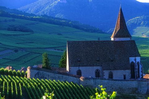 Church in the vineyards