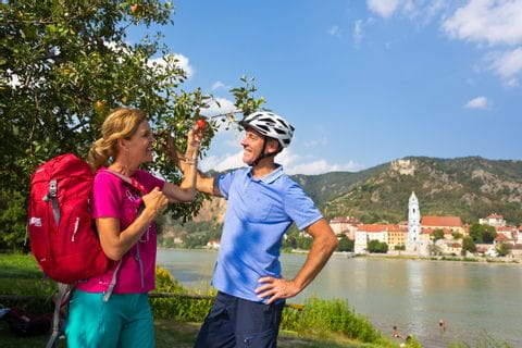 Cyclists pick an apple in the Wachau valley