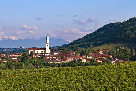 Weinberge in Cormons