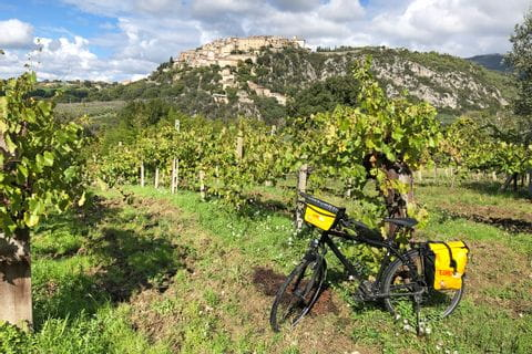 Bike in vineyards in Umbria