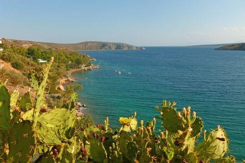 Kakteen an der Küste in Peloponnes