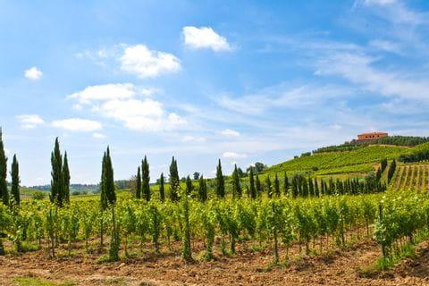 Italienischer Weingarten