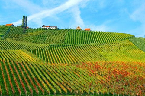 Symmetry of the vineyards