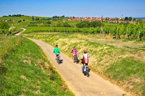 Traumhafter Radweg zwischen Weingärten im Elsass