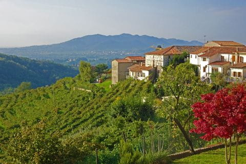 Weinanbau mit Dorf
