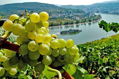Weinbauregion an der Mosel