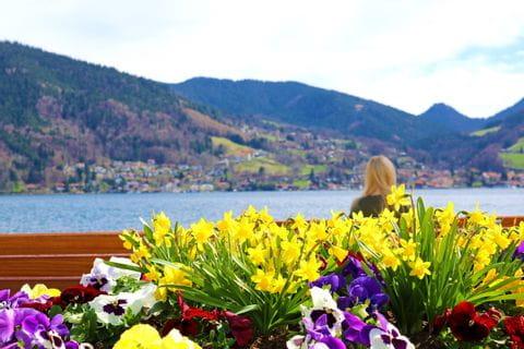 Flowers on the Tegernsee