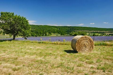 Landschaft mit Lavendel und Strohballen