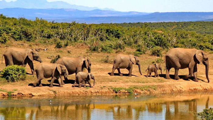 südafrika-elefanten