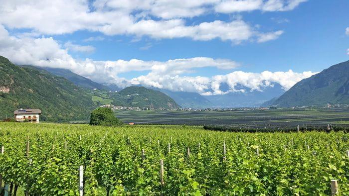 Ausblick auf die Weinreben in Südtirol