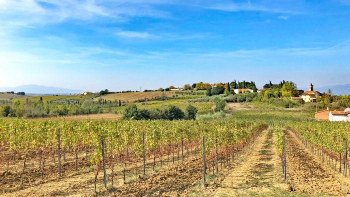Blick auf einen Weingarten in der Toskana