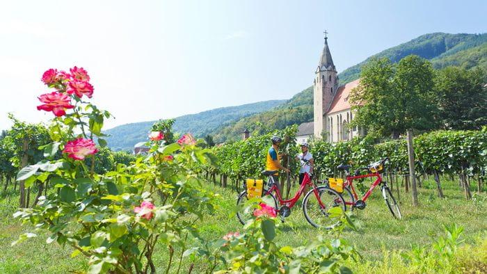 Radfahrer in den Weinreben der Wachau